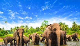 Viaje a Sri Lanka y Maldivas. En Grupo. Perla del Índico