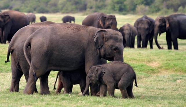Viaje a Sri Lanka. A medida