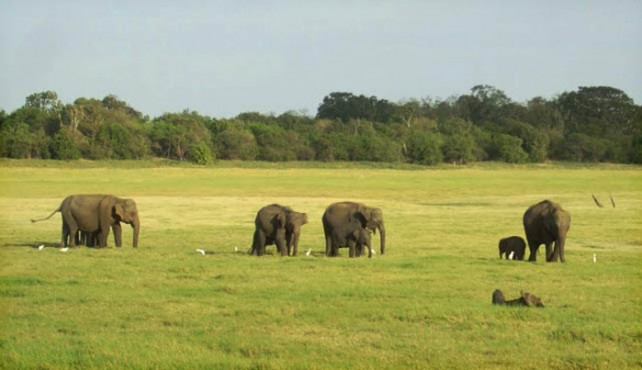 Viaje a Sri Lanka sostenible