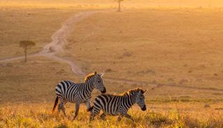 Viaje a Sudáfrica. En Familia. Viaje de lujo en Fly & Drive