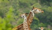 Viaje a Sudáfrica y Mauricio. Ruta Indic Safari en camión