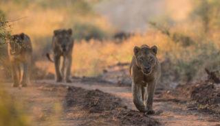 Viaje a Sudáfrica y Mauricio. En Grupo. Ruta Indic Safari en camión