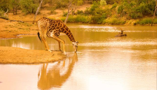 Viaje a Sudáfrica. A medida