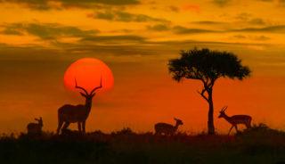 Viaje a Sudáfrica. A medida. Sudáfrica Fly & Drive