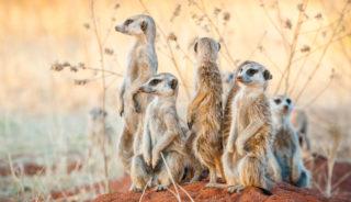 Viaje a Sudáfrica, Namíbia, Botswana y Cataratas Victoria. En Grupo. Gran Okavango en camión
