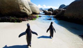 Viaje a Sudáfrica. Semana Santa. En grupo. Sudáfrica experience con Cataratas Victoria