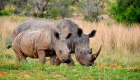 viaje a sudafrica y swaziland en camion taranna