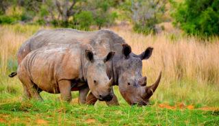 Viaje a Sudáfrica y Swaziland Navidad