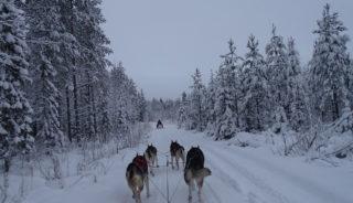Viaje a la Laponia Sueca. En grupo. Viaje cultural a la tierra de los Saami acompañados por Francesc Bailón