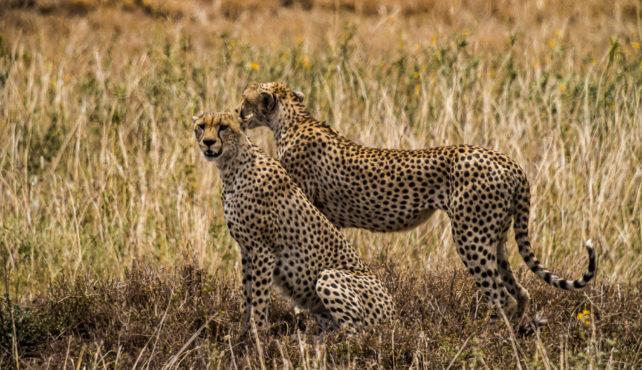 Viaje a Tanzania. Fotográfico. Con Quim Dasquens