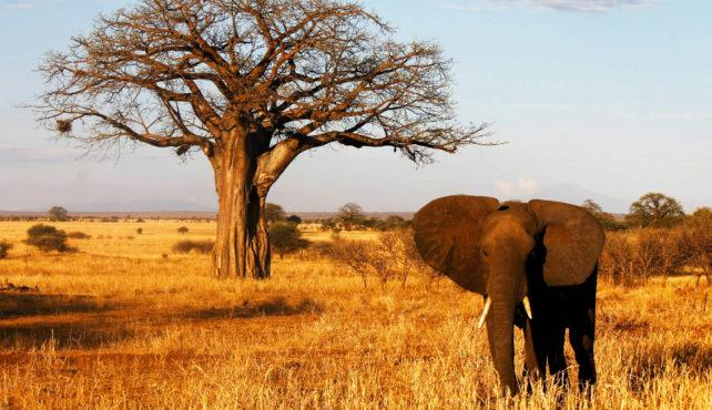 Viaje a Tanzania. A medida. Herencia Africana