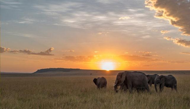 Viaje a Tanzania. A medida