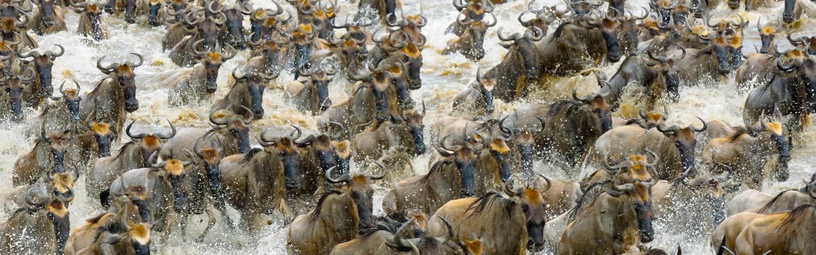 Viaje a Tanzania. La gran migración