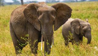 Viaje a Tanzania y Zanzibar. En camión. Tanzania confort salida especial 16 de agosto - 12 días