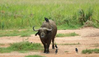 Viaje a Uganda. En camión