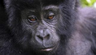 Viaje a Uganda. Gorila Trek confort en camión-