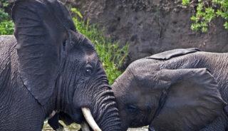 Viaje a Uganda. Gorila Trek confort en camión