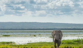 Viaje a Uganda. A medida. La perla de África