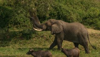 Viaje a Uganda. A medida. Safari gorilas