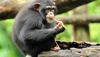 Viaje a Uganda. En Grupo. Safari Gorilas