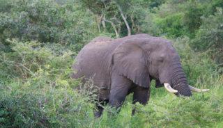 Viaje a Uganda y Rwanda. En camión. Los últimos gorilas de montaña. Gorila trek clásico 18 días