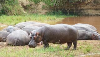 Viaje a Uganda y Rwanda. En camión. Los últimos gorilas de montaña. Gorila trek 18 días