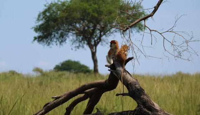 Viaje a Uganda y Rwanda
