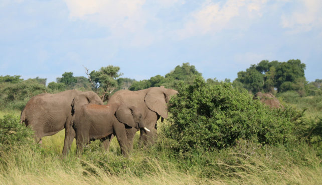 Viaje a Uganda y Rwanda. En camión