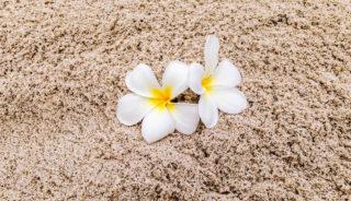 Viaje a Vanuatu. A medida. Tres islas. Efate, Tanna y Espiritu Santo
