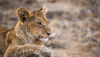 Viaje a Zimbabwe, Sudáfrica y Mozambique. En camión. Safari Austral 16 días