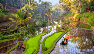 Viaje a Indonesia. Voluntariado. Teach & travel Bali