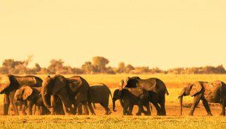 Viajes a Botsuana