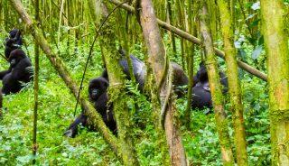 Viajes a Ruanda