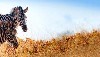 Viajes a Suazilandia