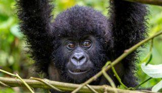 Viajes a medida a Uganda