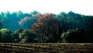 vilajoana-natura-taranna001